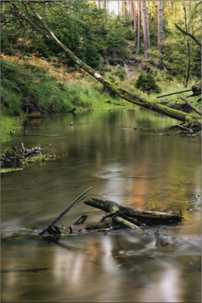 Fluss im Wald Hochformat