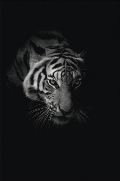 Tiger Hochformat