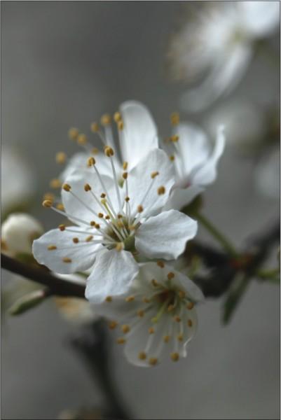 Blütenzweig 2