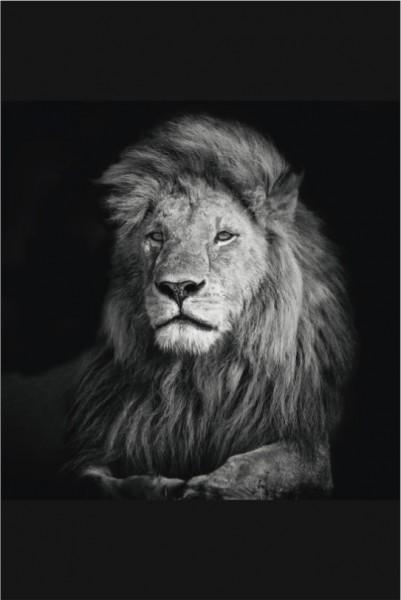 Löwe Hochformat