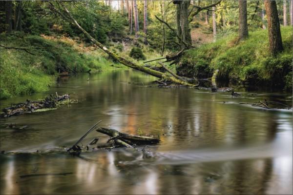Fluss im Wald Querformat